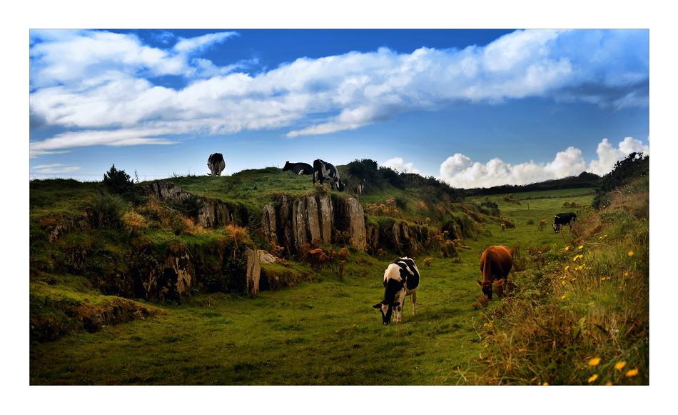 Sheeps Head Peninsula, Co. Cork
