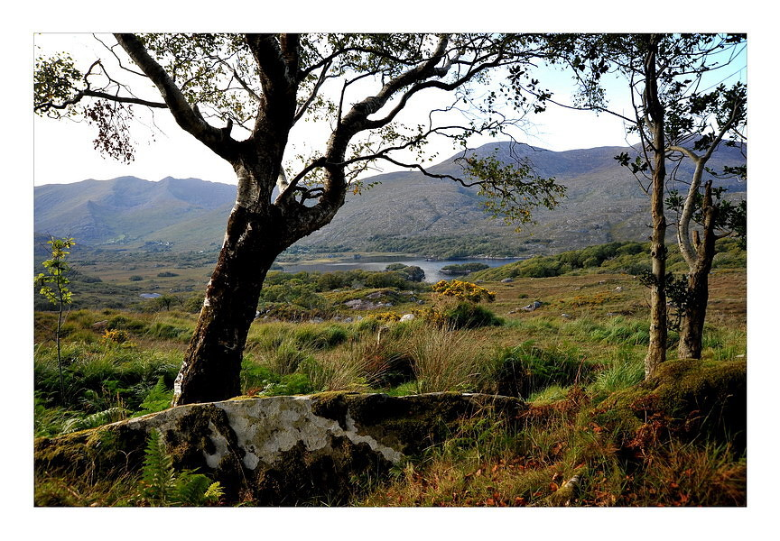 Ladie`s View Killarney National Park IV