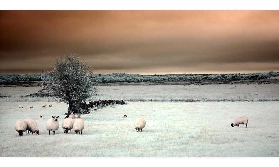 Irgendwo im County Mayo (Infrarot)