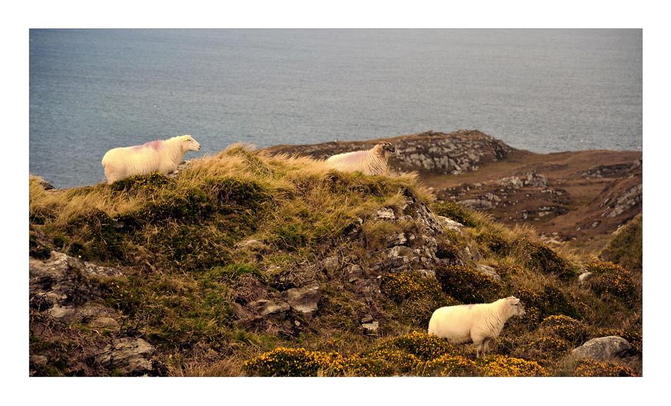 Sheeps Head Peninsula, Co. Cork VII