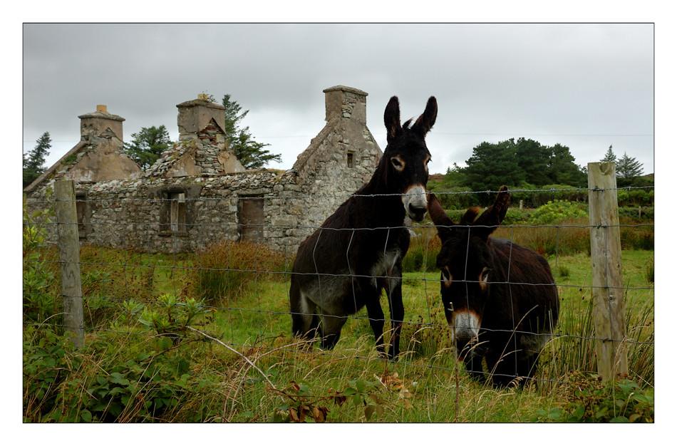 Achill Island / County Mayo VII