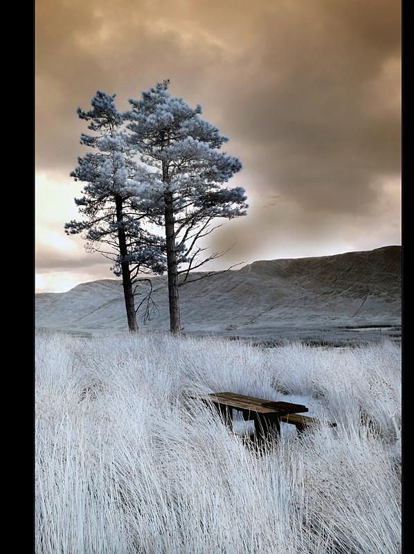 Sheeffray Wood / Connemara II (Infrarot)