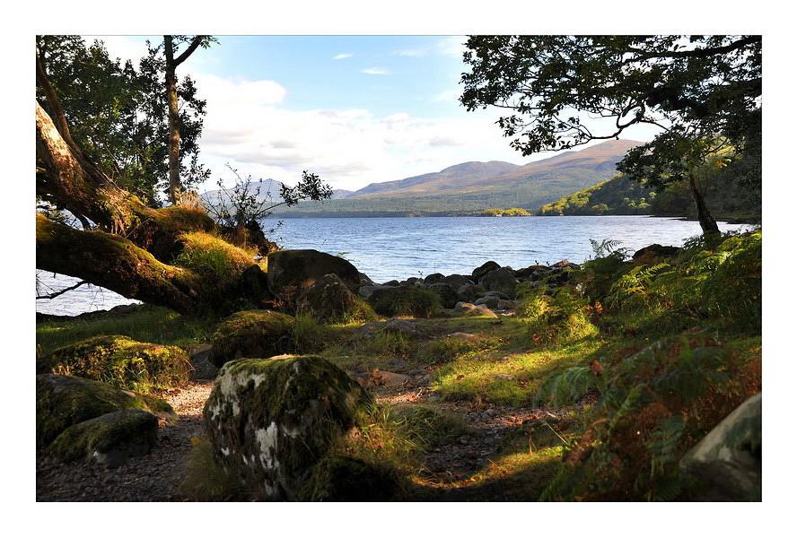 Tomies Wood / Killarney National Park I