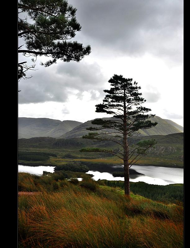 Sheeffray Wood / Connemara