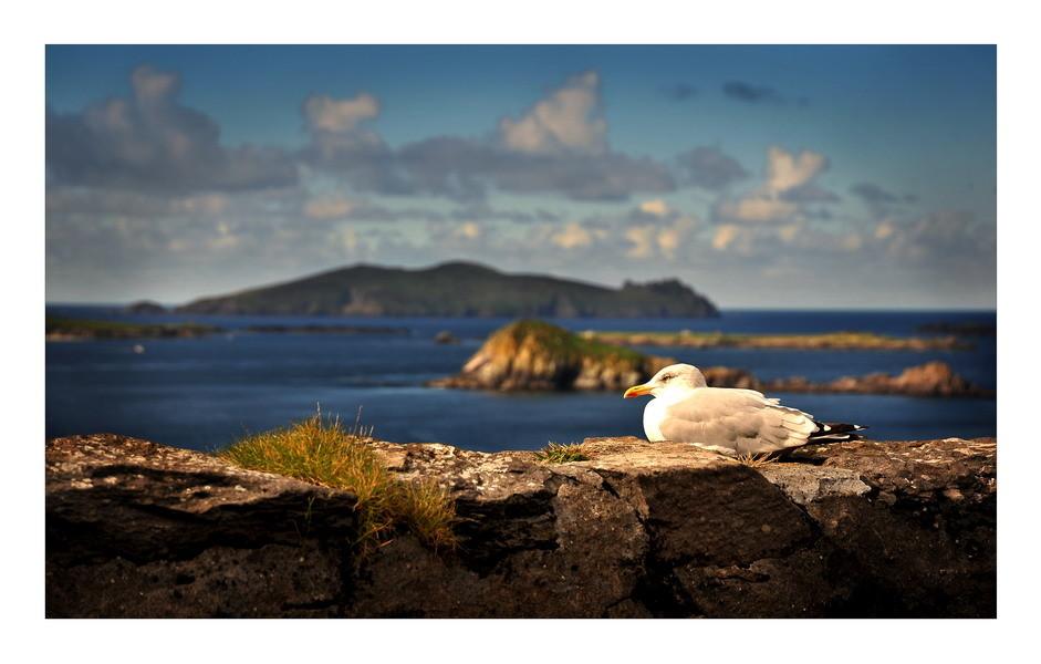 Slea Head Drive, Dingle Peninsula, Co. Kerry II