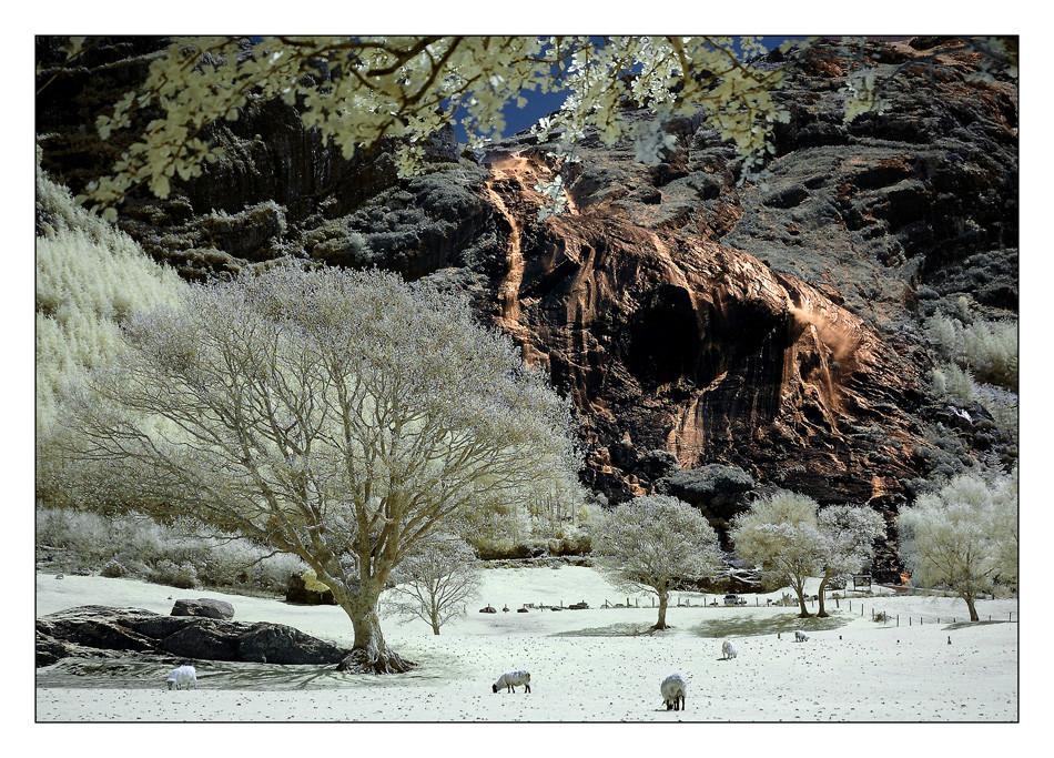 Inchiquin Park / Beara Peninsula XV (Infrarot)