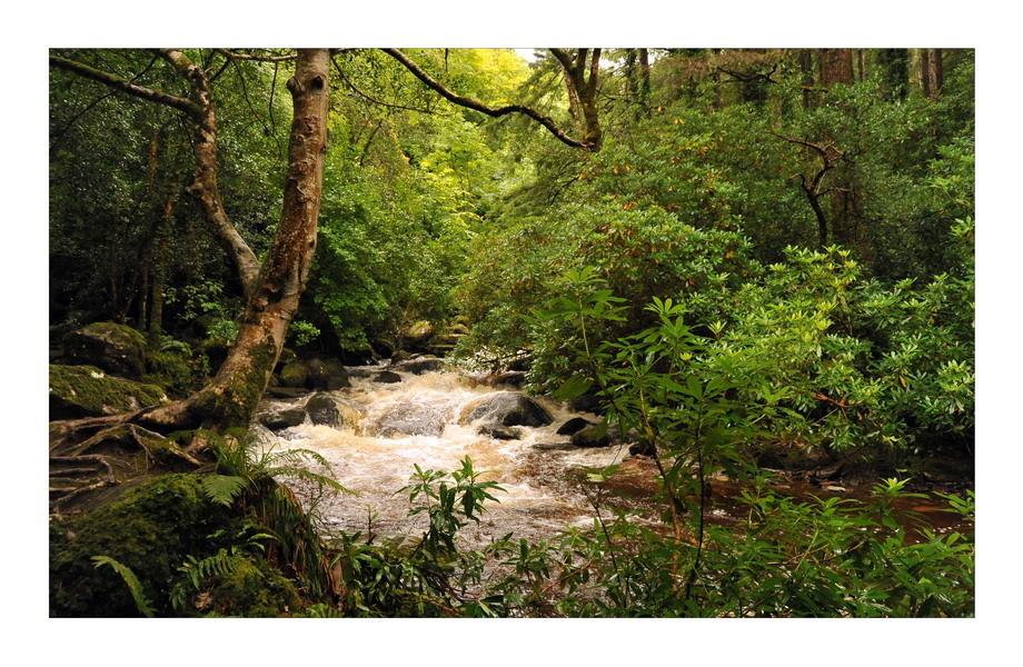 Torc Waterfall, Killarney Nationalpark II