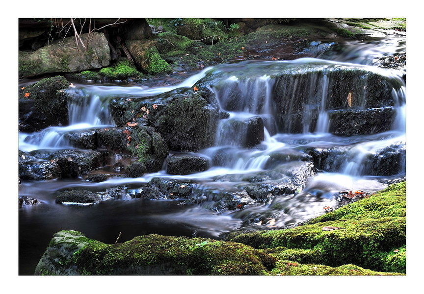 O'Sullivan's Cascade / Tomies Wood / Killarney National Park IV