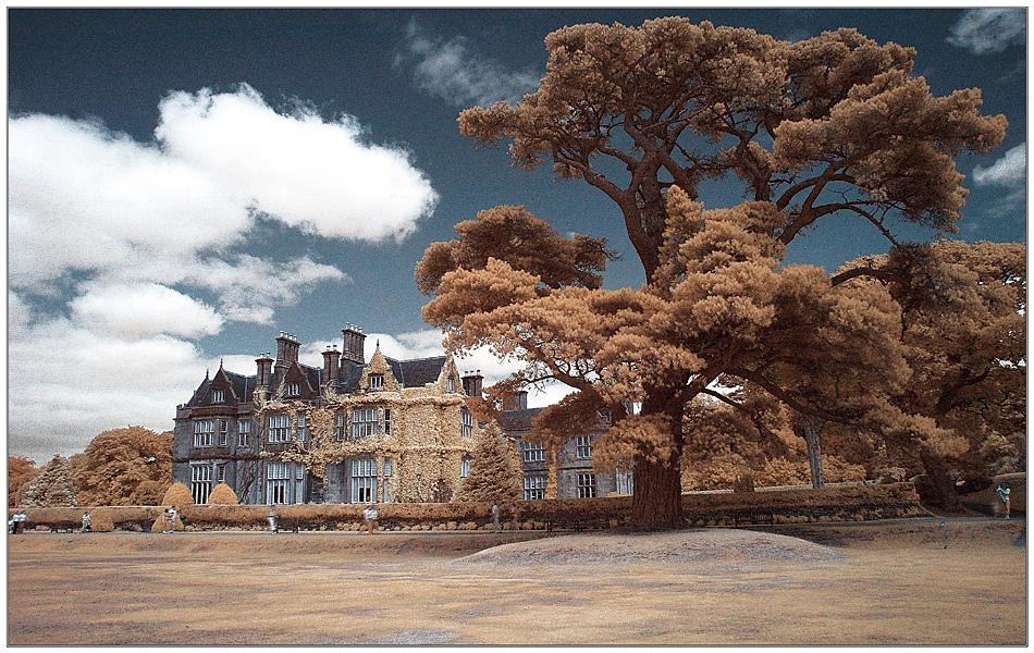 Muckross House and Gardens VI (Infrarot)