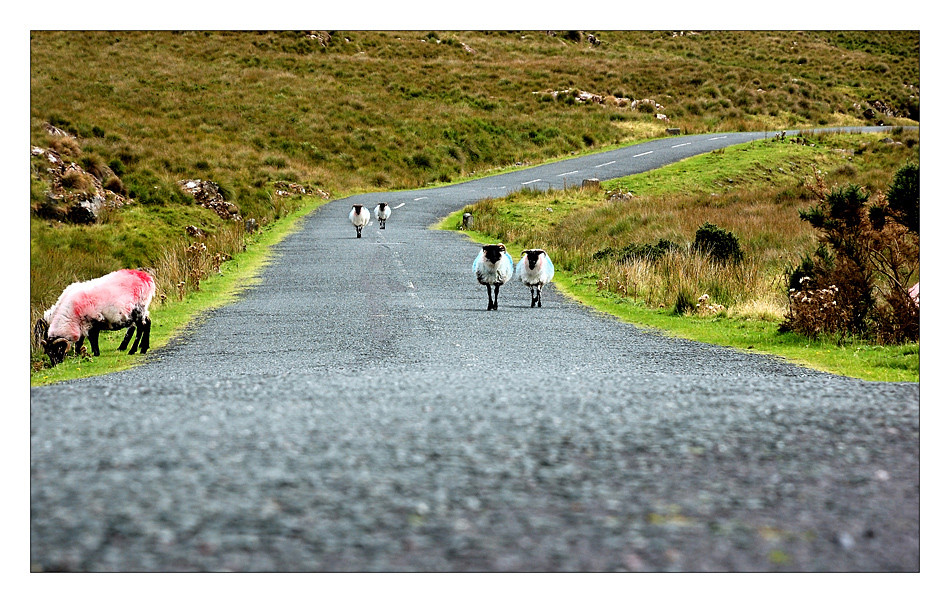 Doo Lough Pass / Connemara II