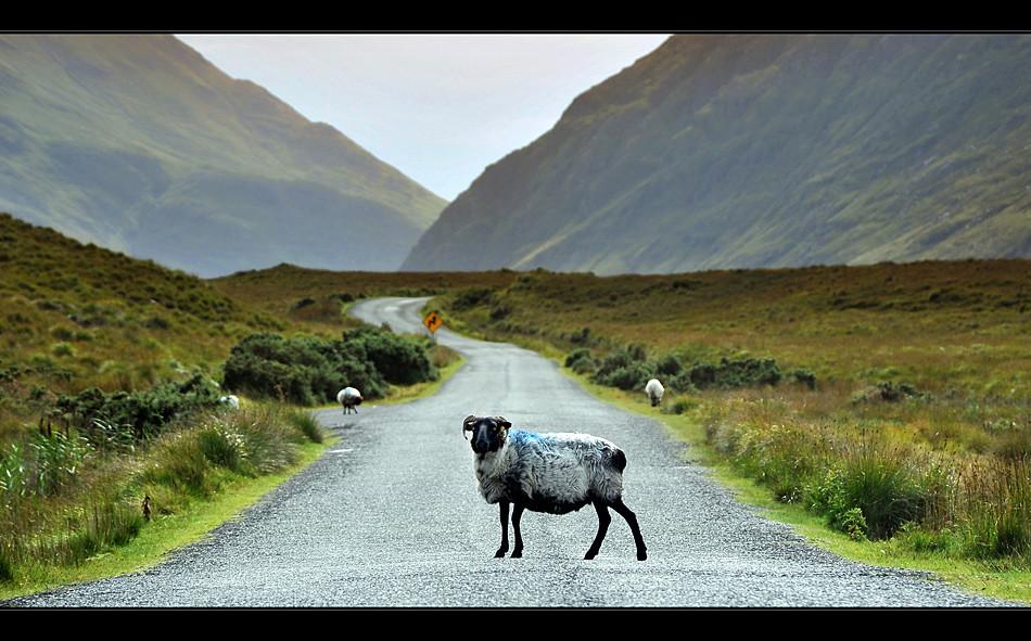 Doo Lough Pass / Connemara III