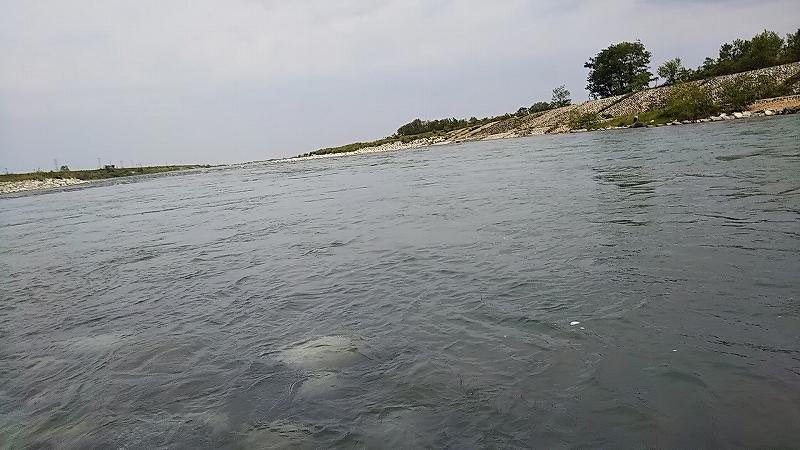 ミウラデザイン サクラマス 黒部川