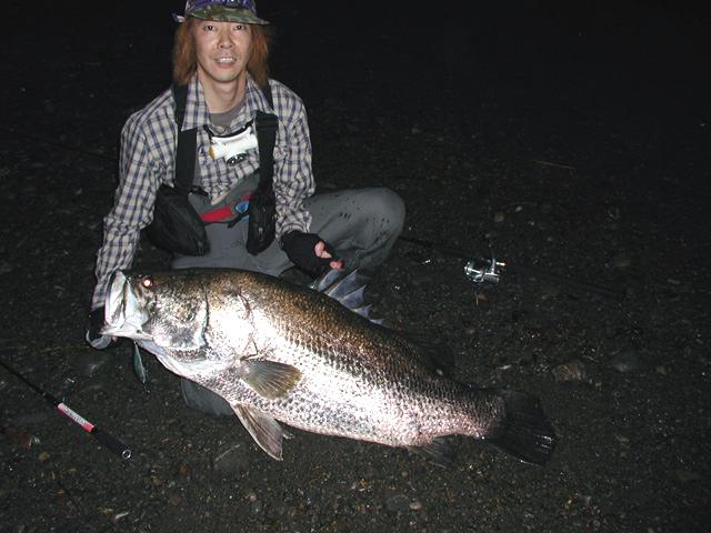 ミウラデザイン ARROWS  レア レイクアユ アカメ 126cm