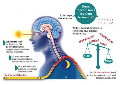Chronobiologie Nutritionelle