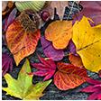 Motive Herbst