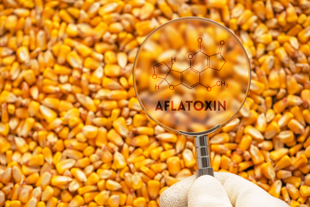 The small molecule detection challenge : the aflatoxin case study
