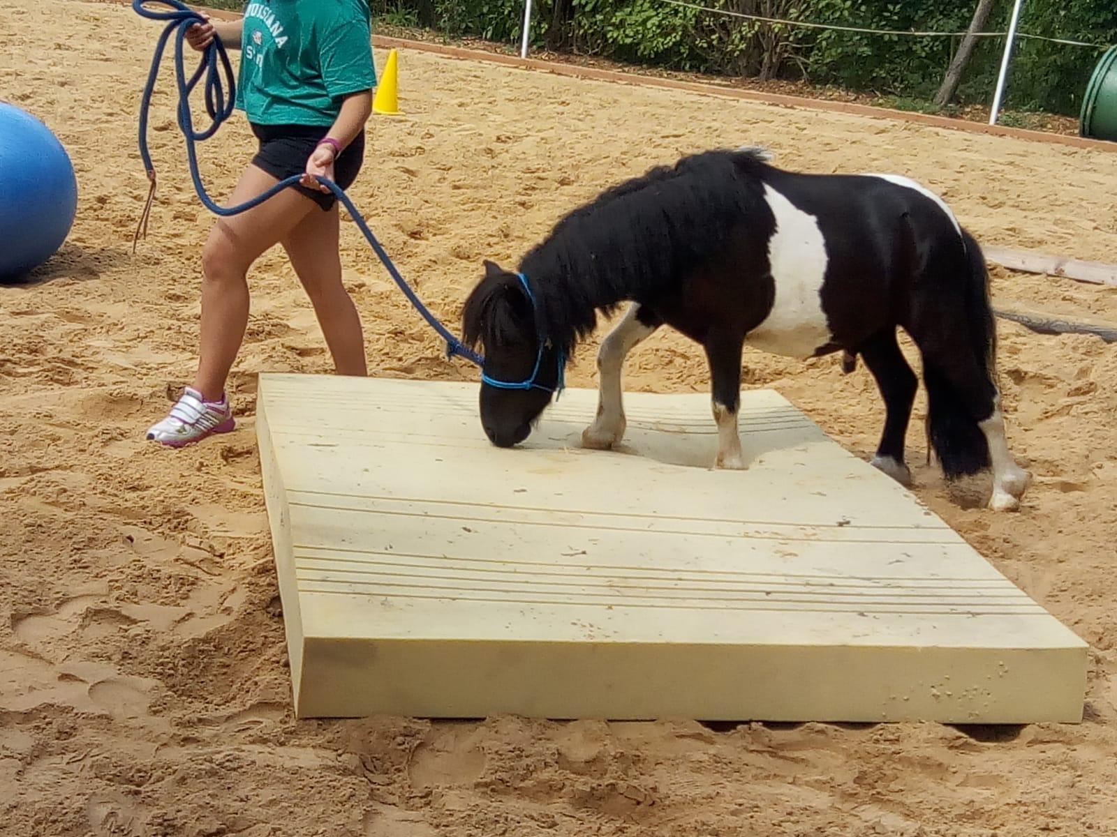 Pony Flecki