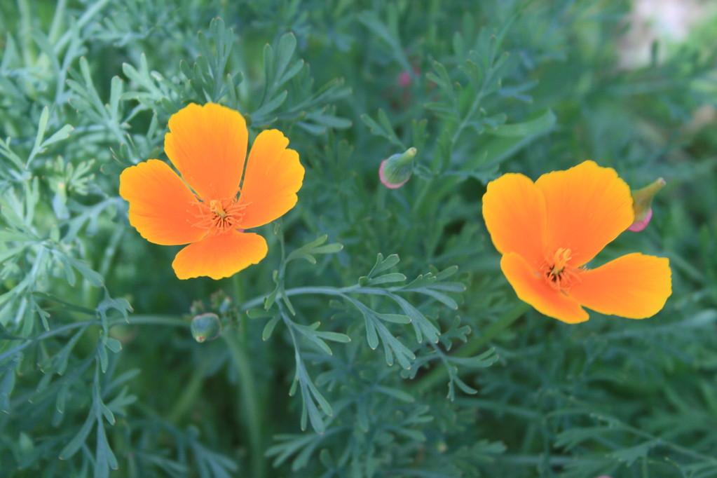 Printemps fleuri - Chambres d'hôtes Le Cadran Solaire
