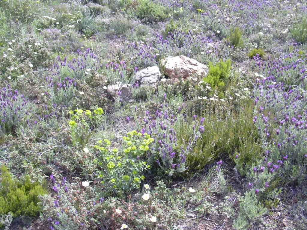 Tapis végétal méditerranéen dans la garrigue de Cabrières