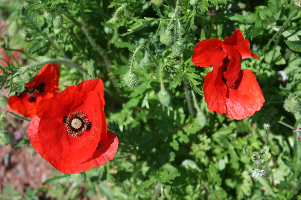 Printemps fleuri - Chambres d'hôtes Le Cadran Solaire à Cabrières