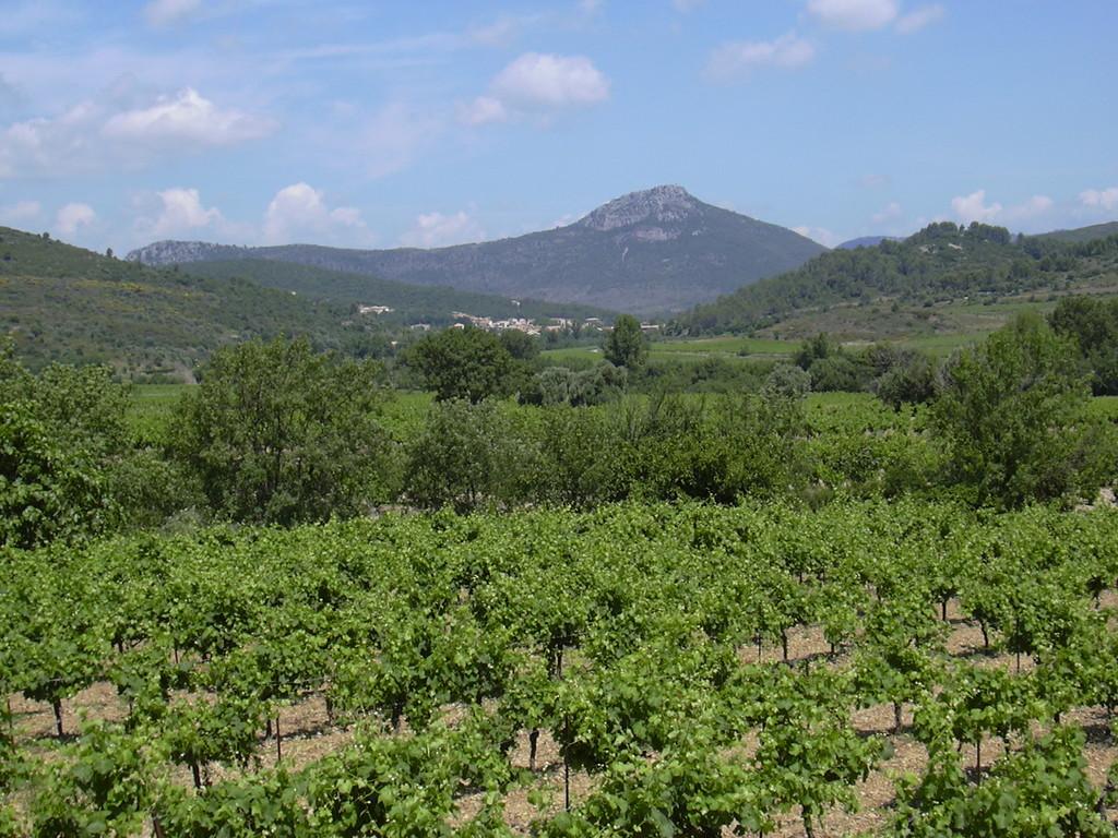 Cabrières en Languedoc Sud de France