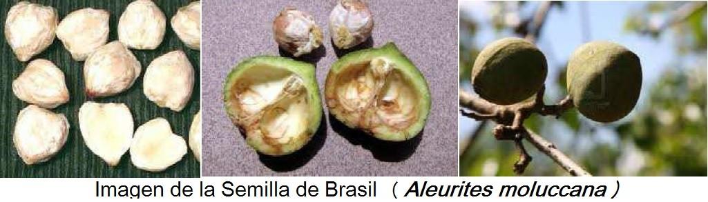Nuez brasilena para adelgazar