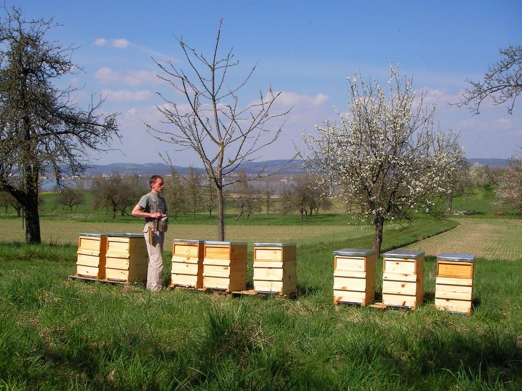 Hier stehe ich mit meinen Bienen auf der Höri in der Kirschblüte.