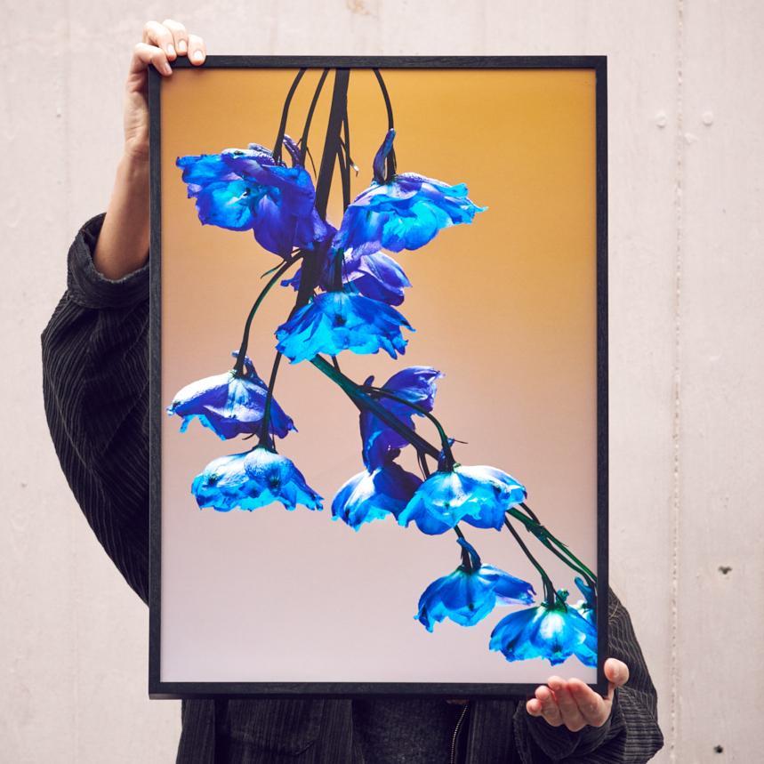 Handsignierter A2-Print von «Studio Végété», fotografiert von Tobias Siebrecht ...