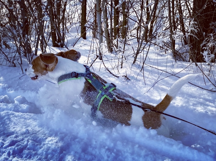 The Cuddly Tracker Blanda - pure Lebensfreude im Tiefschnee (Februar 2021)