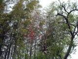 1本の桃木の枝 に紅白の花 が咲いています