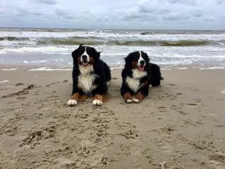 Theo und Wenzel