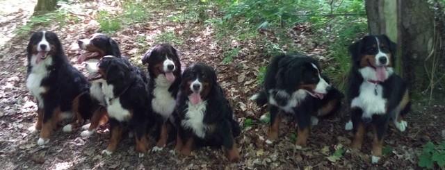 Theo, Bruder (Timo) Filou, Schwester Theodora-Käthe, Mama Karo, Oma Liese, Schwester Toni, Schwester Tante-Käthe