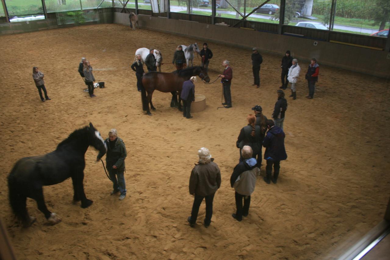Kurs mit Peter Deike bei Horses Home