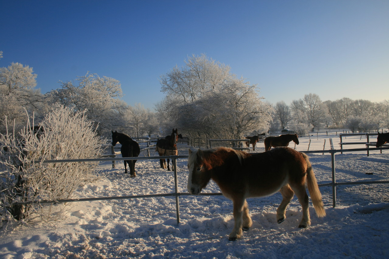 Winter bei Horses Home
