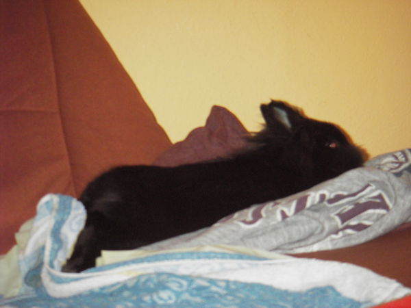 Entspannung pur - Gimli
