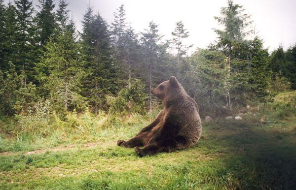 Der Bärenpark in Orsa
