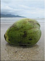 De mooiere stranden van het eiland worden begrensd door vele lange rijen met kokosnootbomen.
