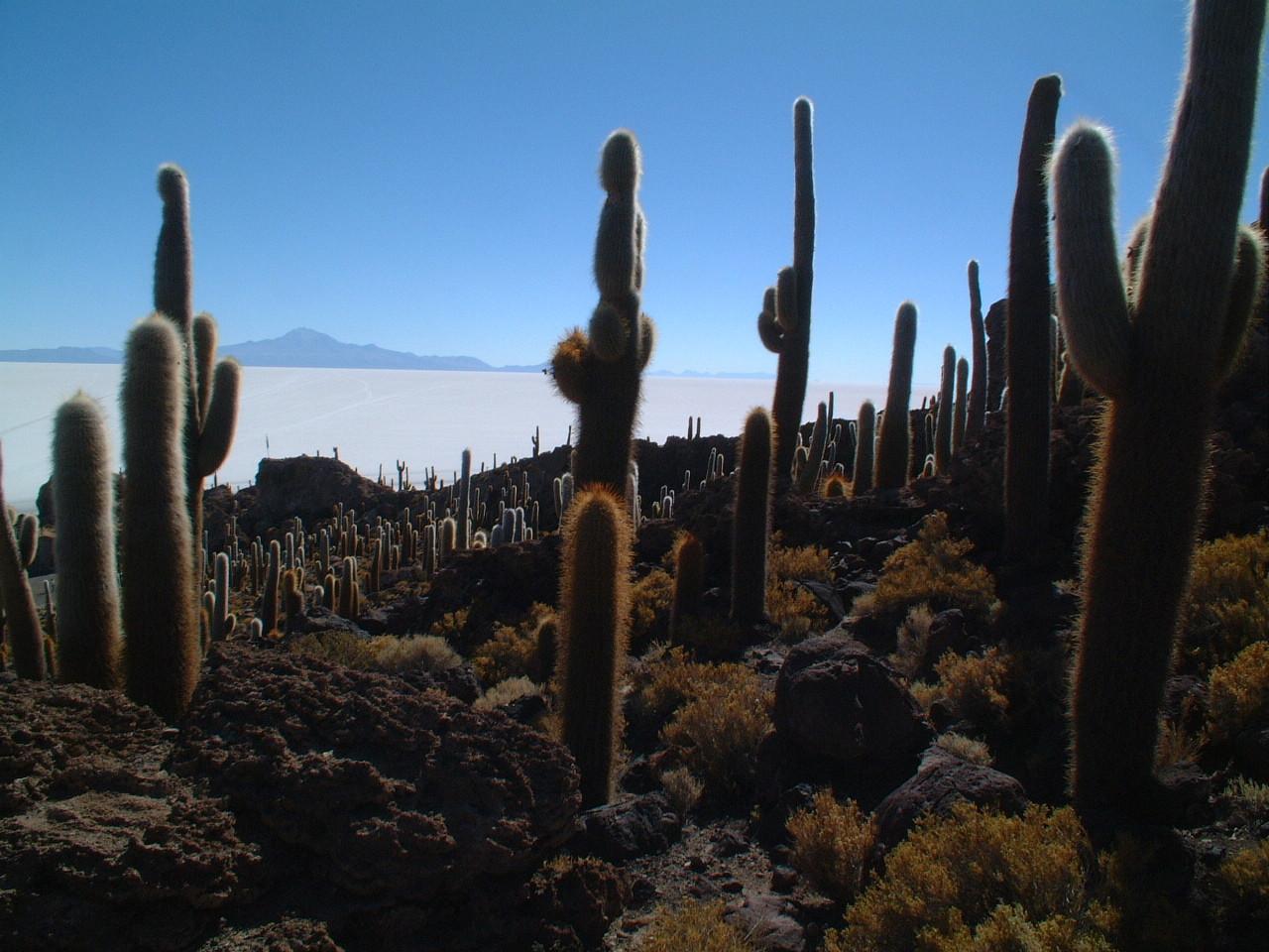 Uitkijk vanaf Inca Wasi op de zoutmeren van Bolivia.