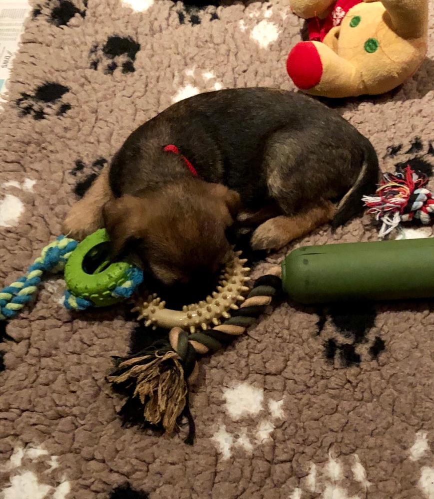 Kleine Kinder - zwischen den ganzen Spielsachen eingeschlafen