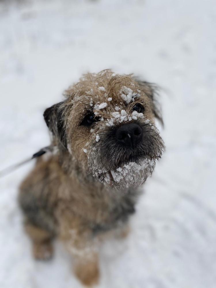 Fly war im Schnee