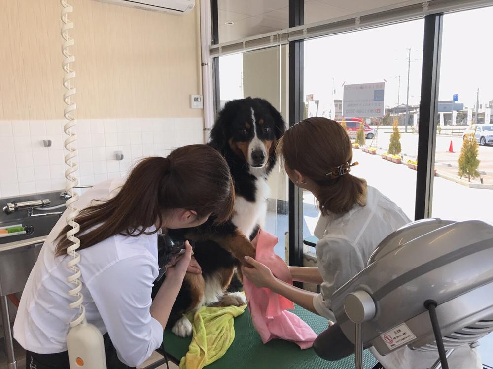 Dog salon Very mahana(ドッグサロン ベリーマハナ)トリミングをお待ちの間はランチをお楽しみ下さい!