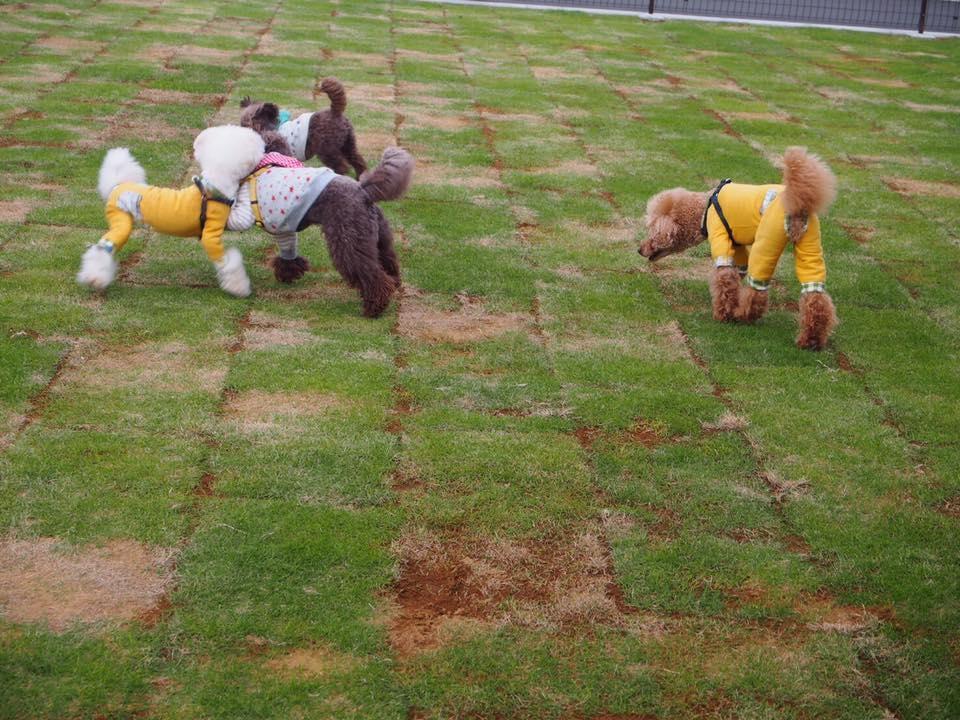 ドッグガーデンオープンしました!現在芝の養成中のため小型犬のみ御利用可能です。
