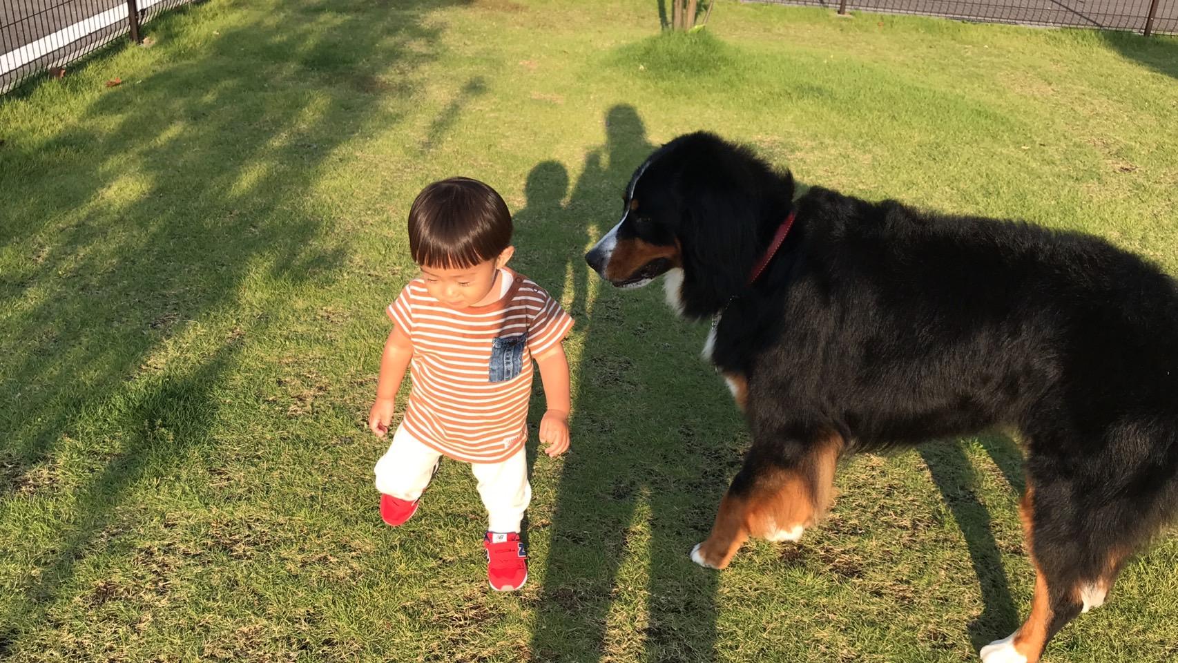 ドッグランは小型犬、中大型犬に仕切られています