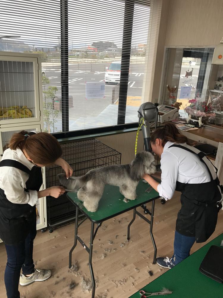 Dog salon Very mahana オプションメニューも豊富です。