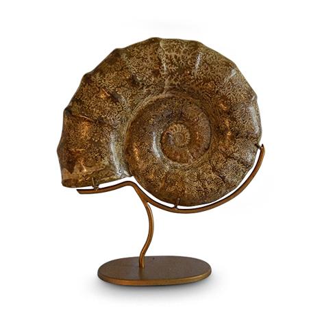 Ammonit als Wohnobjekt