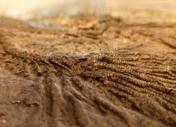 Hochwertige Kunstdrucke von Fossilien und Mineralien für gelungenes Interior Design.