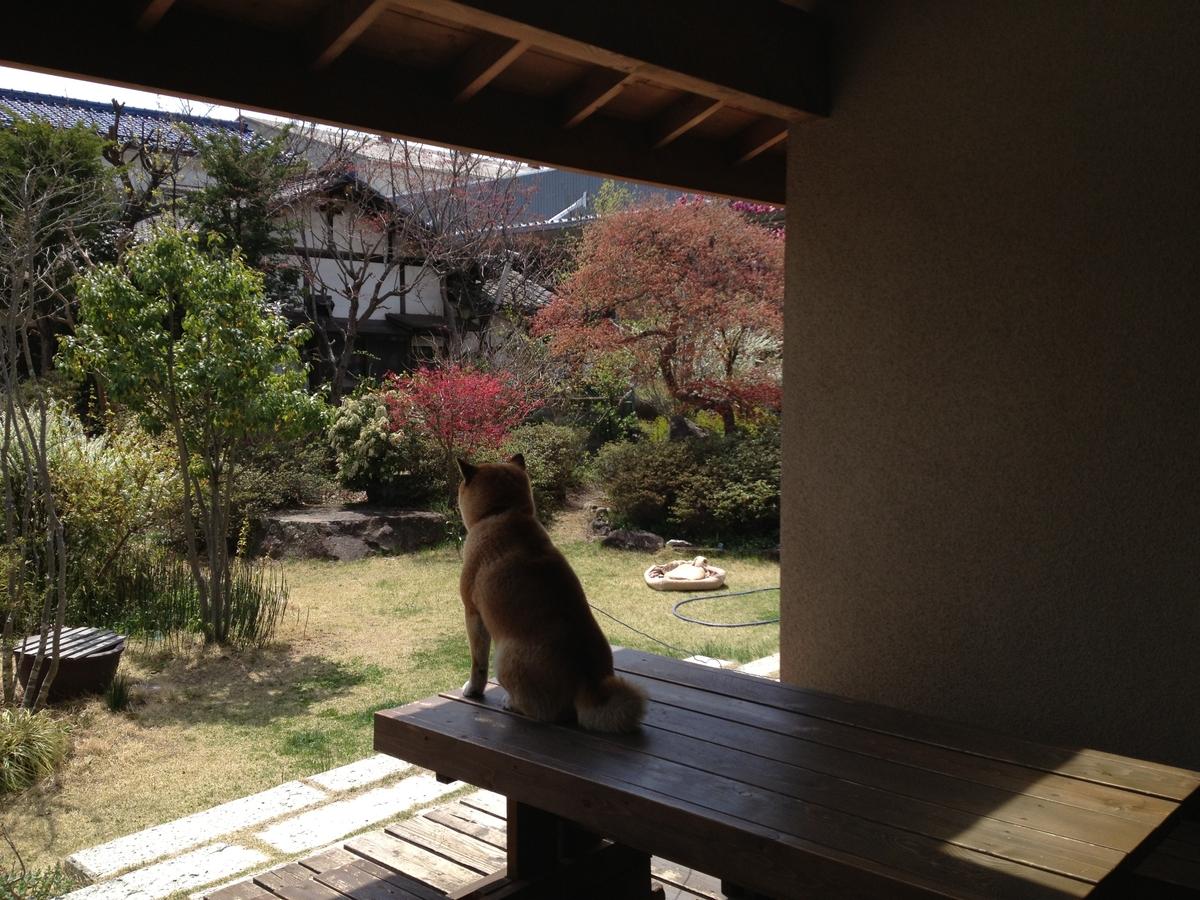 カフェあくら(松本市)-カフェ部分インナーデッキ