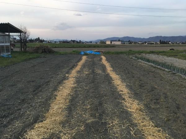 ジャガイモ 建築家の畑 長野県松本市 安曇野市 半農半建