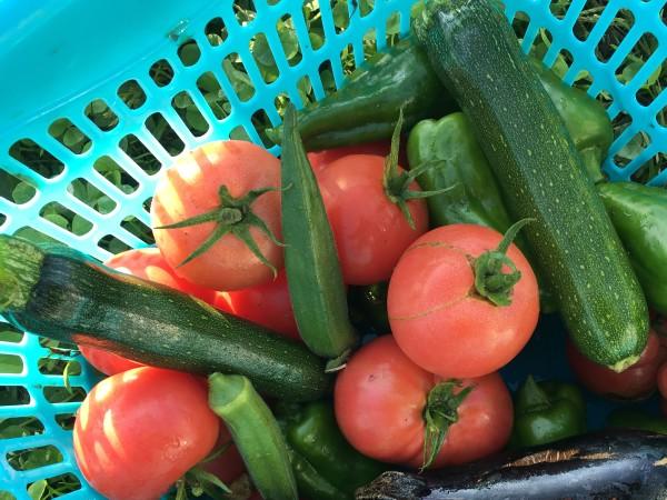 news設計室 事務所 半農半建 農作業 ハウス 野菜づくり