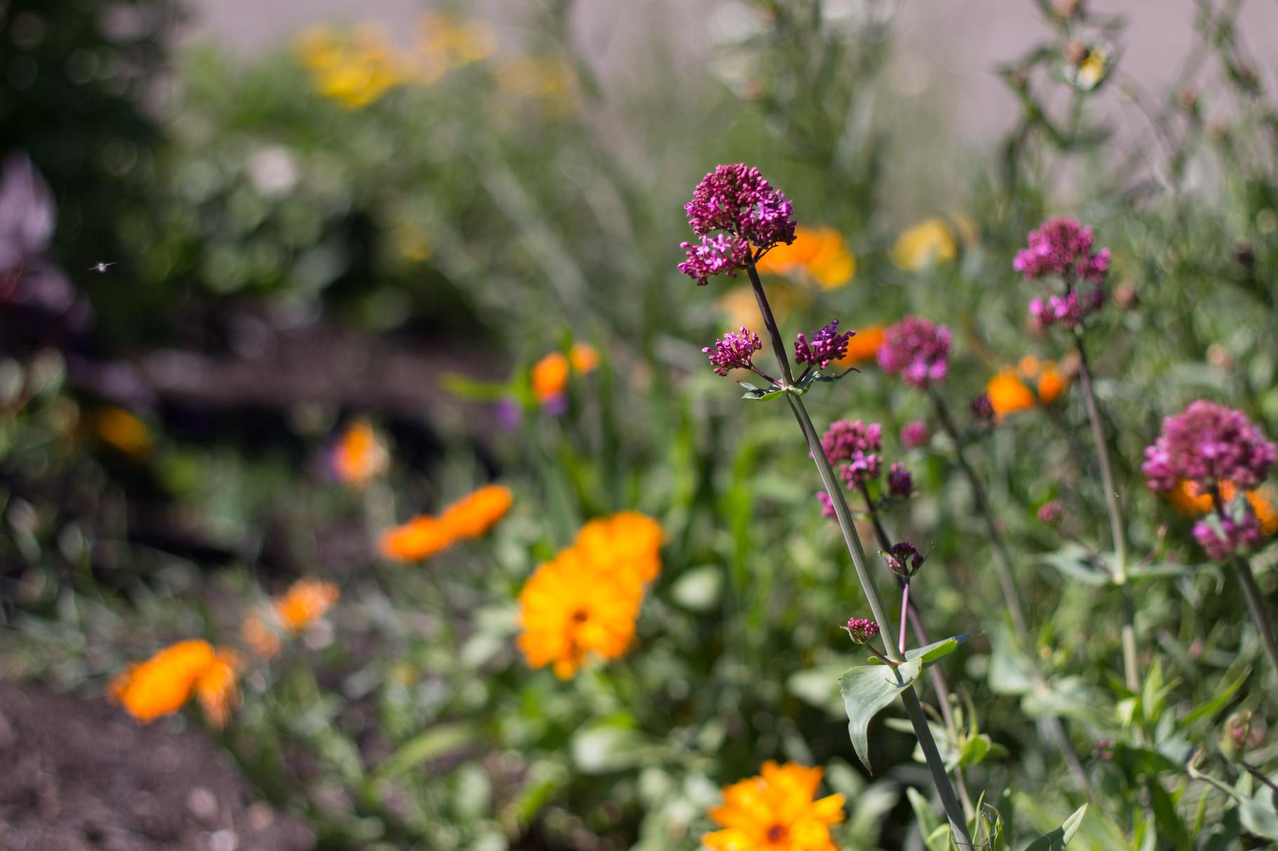fleurs ,Gîtes et chambre d'Hôtes Peyrecout Tarn Cordes Albi